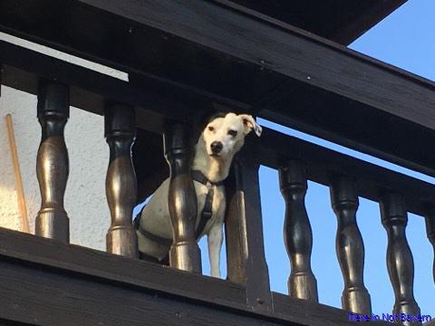 mischlingshunde von privat kaufen